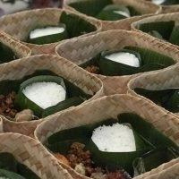 Bungkus Nasi Kotak Besek